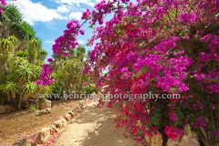 Botanicactus, Mallorca, 20.06.2016 [Photo: Christian Behring]