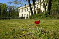 """Archenhold-Sternwarte hinter einer Wiese  mit einer Tulpe und Butterblume im Treptower Park,  """"STADTANSICHTEN"""", Berlin, 23.04.2020"""